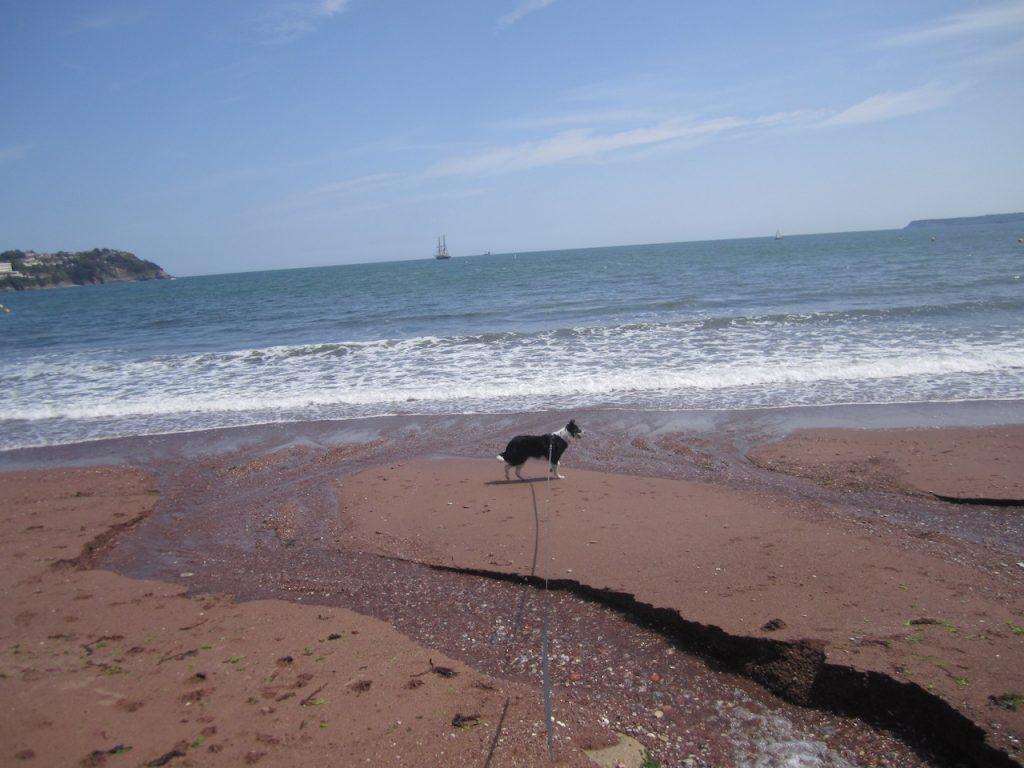 Ted on Beach